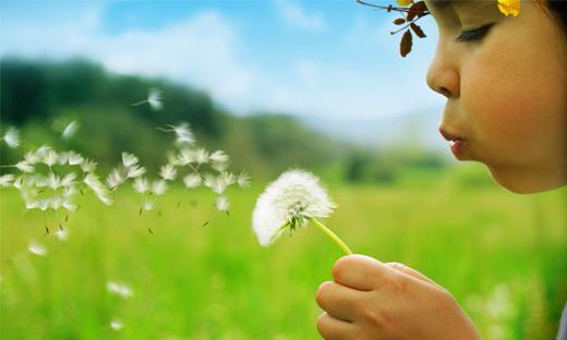 Inspiração que vem da natureza: flores dente-de-leão
